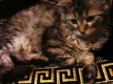 Котенок в крайне добрые руки