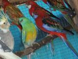 Птицы разных видов