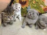 Хорошие котятки